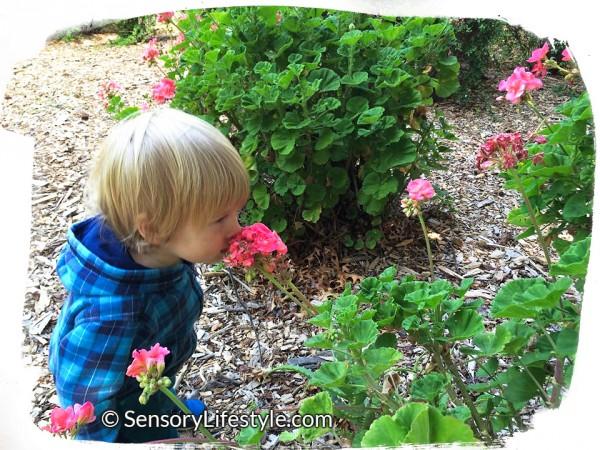 Sensory Processing: Josh smelling flowers