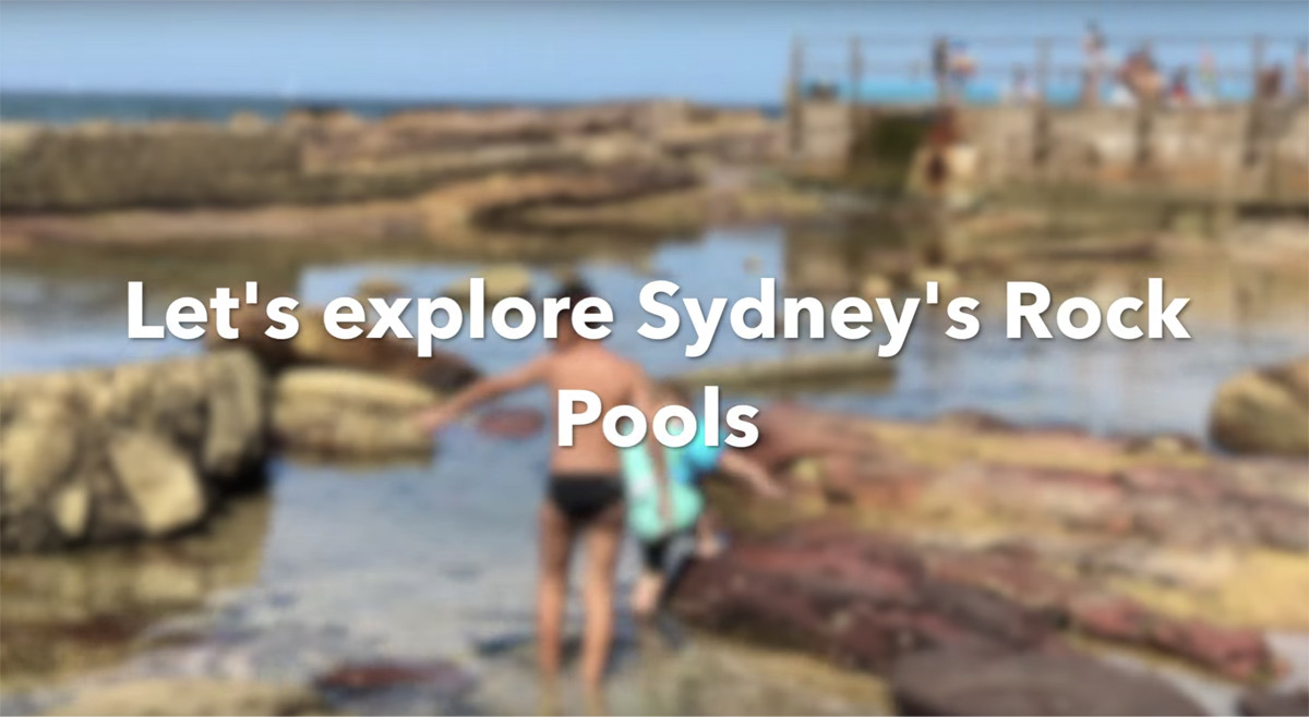 Sydney Rock Pools &  Sydney Aquarium Review
