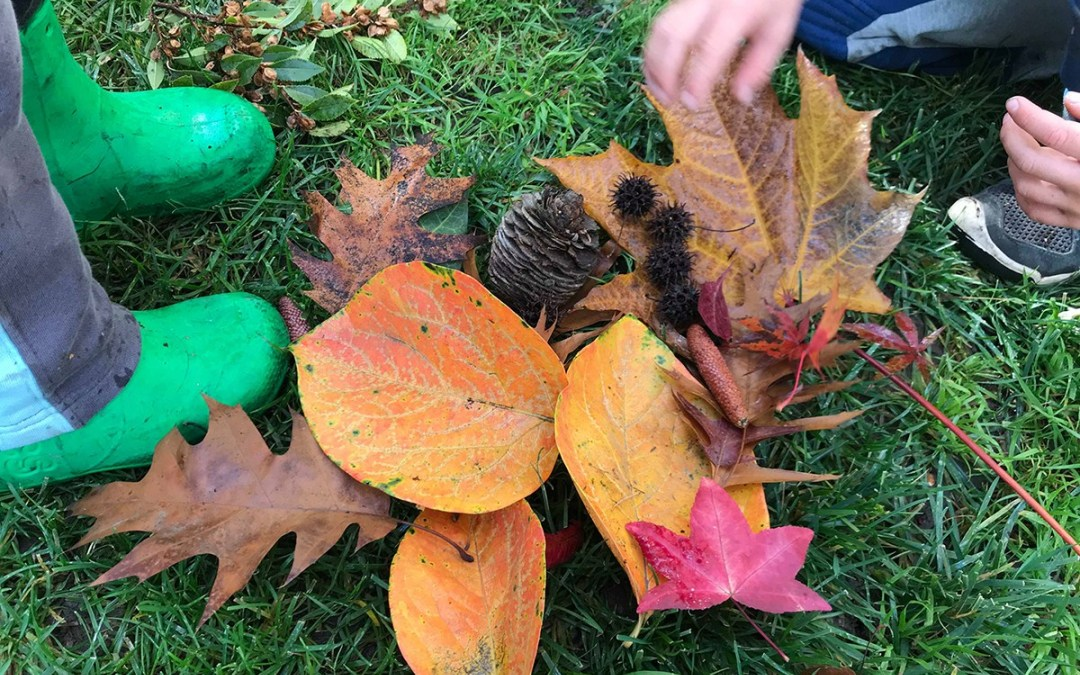 Autumn learning for toddler: leaves on ground